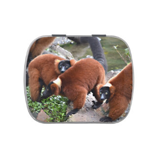 group of red ruffed lemurs c animal candy tins