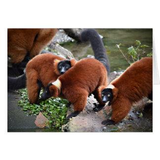 group of red ruffed lemurs c animal card