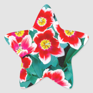Group of red with white tulips star sticker