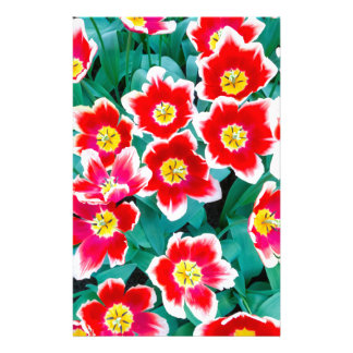 Group of red with white tulips stationery