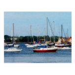 Group of Sailboats Newport RI Postcard