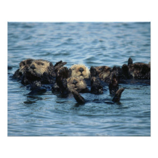 Group of Sea Otters Poster