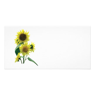 Group of Sunflowers Picture Card