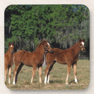 Group of Thoroughbred Foals Drink Coaster