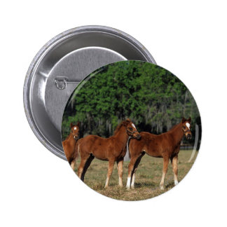 Group of Thoroughbred Foals Pinback Button