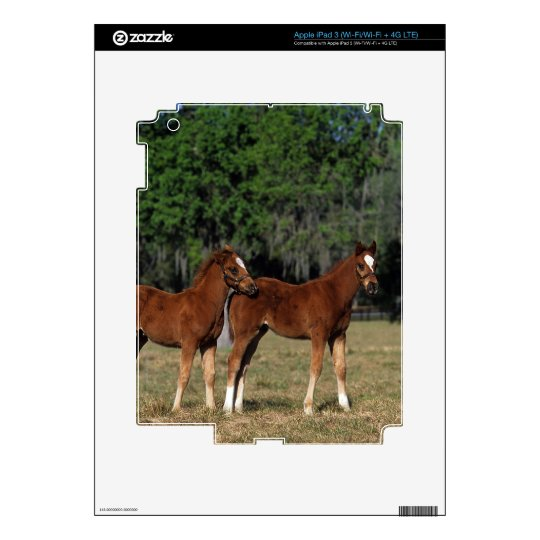 Group of Thoroughbred Foals Skins For iPad 3