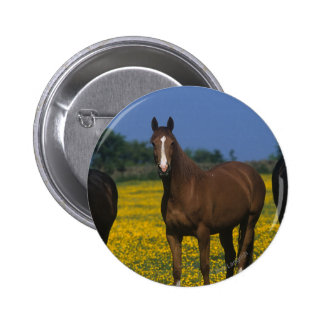 Group of Thoroughbred Horses Button