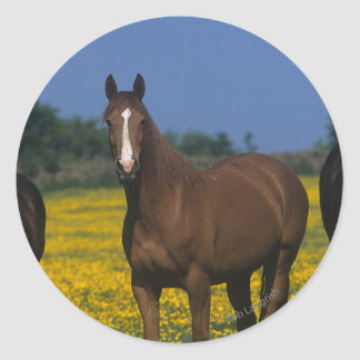 Group of Thoroughbred Horses Classic Round Sticker