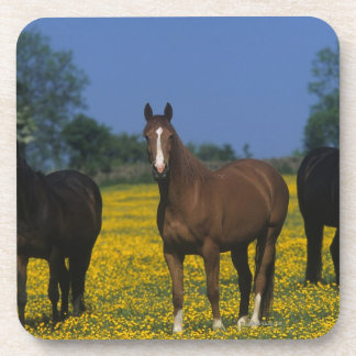 Group of Thoroughbred Horses Coaster