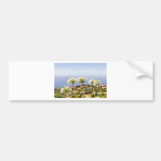Group of white agapanthus near village and sea bumper sticker