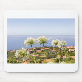 Group of white agapanthus near village and sea mouse pad