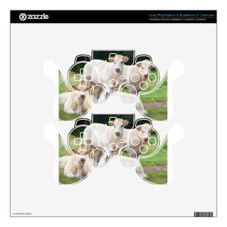 Group of white beige cows posing in meadow decal for PS3 controller