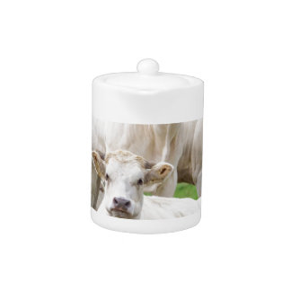 Group of white beige cows posing in meadow teapot
