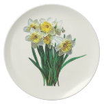 Group of White Daffodils Dinner Plates