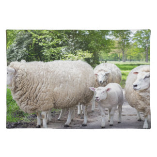 Group of white sheep and lamb on road in nature cloth placemat