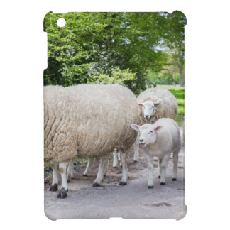 Group of white sheep and lamb on road in nature cover for the iPad mini