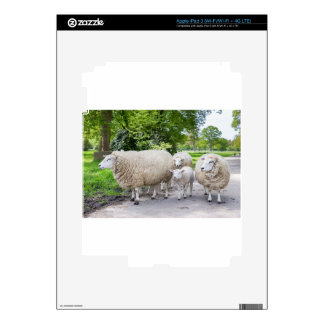 Group of white sheep and lamb on road in nature iPad 3 skin
