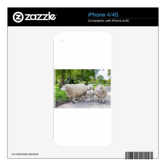 Group of white sheep and lamb on road in nature iPhone 4 decal