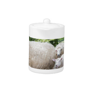 Group of white sheep and lamb on road in nature teapot