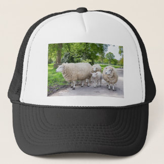 Group of white sheep and lamb on road in nature trucker hat