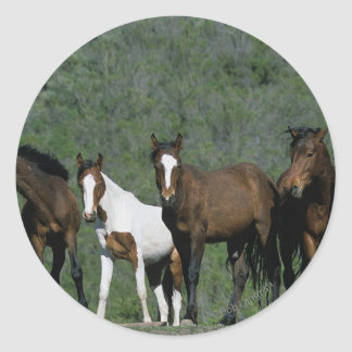 Group of Wild Mustang Horses Classic Round Sticker