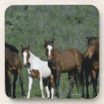 Group of Wild Mustang Horses Coaster