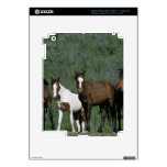 Group of Wild Mustang Horses Decals For iPad 3