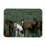 Group of Wild Mustang Horses Flexible Magnet