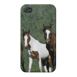 Group of Wild Mustang Horses iPhone 4 Covers