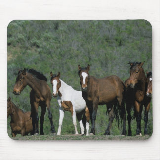 Group of Wild Mustang Horses Mouse Pad