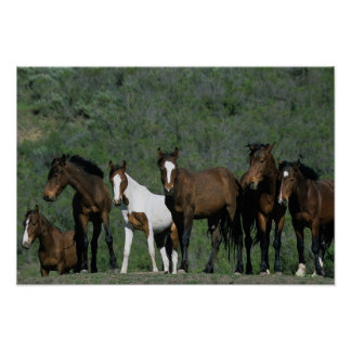 Group of Wild Mustang Horses Poster