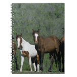 Group of Wild Mustang Horses Spiral Note Books