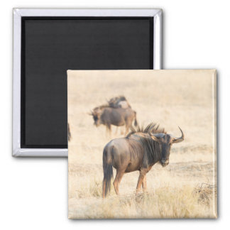 Group of wildebeest 2 inch square magnet