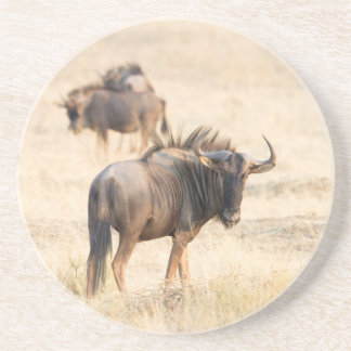 Group of wildebeest drink coaster