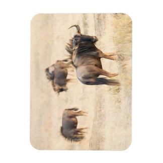 Group of wildebeest rectangular photo magnet