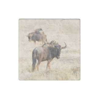 Group of wildebeest stone magnet