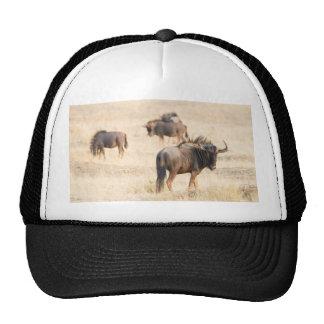 Group of wildebeest trucker hat