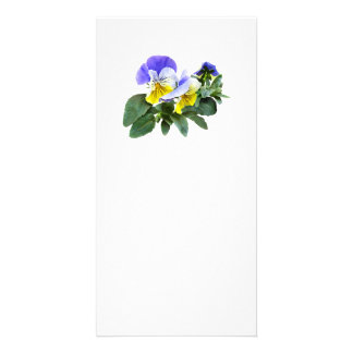 Group Of Yellow And Purple Pansies Card