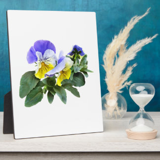 Group Of Yellow And Purple Pansies Plaque