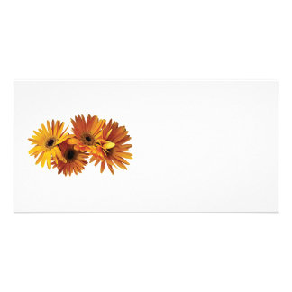 Group of Yellow Gerbera Daisies Photo Cards