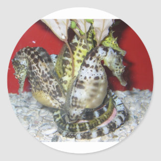 Group of Yellow-Green, Brown & White Sea Horses Classic Round Sticker