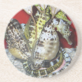 Group of Yellow-Green, Brown & White Sea Horses Drink Coaster