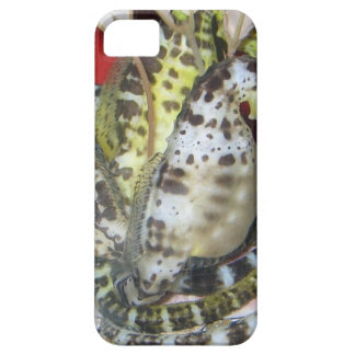 Group of Yellow-Green, Brown & White Sea Horses iPhone SE/5/5s Case