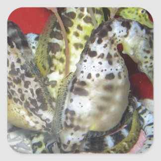 Group of Yellow-Green, Brown & White Sea Horses Square Sticker