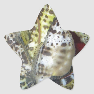 Group of Yellow-Green, Brown & White Sea Horses Star Sticker