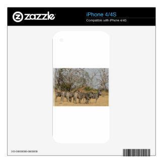 Group of Zebras and Giraffe TomWurl.jpg Skins For The iPhone 4