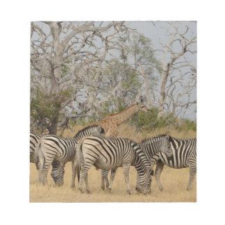 Group of Zebras and Giraffe TomWurl. Notepad