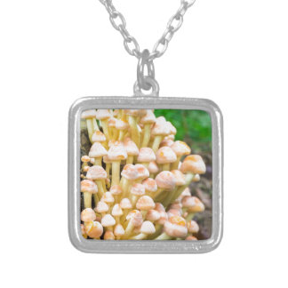Group orange yellow mushrooms in fall forest silver plated necklace