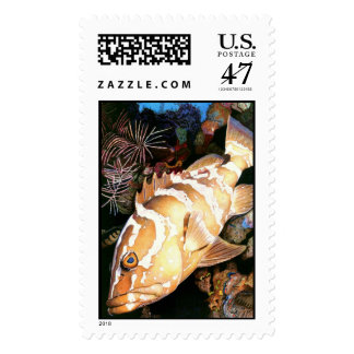 Grouper Stamp