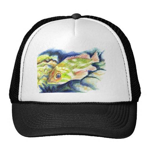Grouper - Watercolor Pencil Drawing Mesh Hats